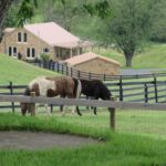 PV Stables-Horses _ House in Background